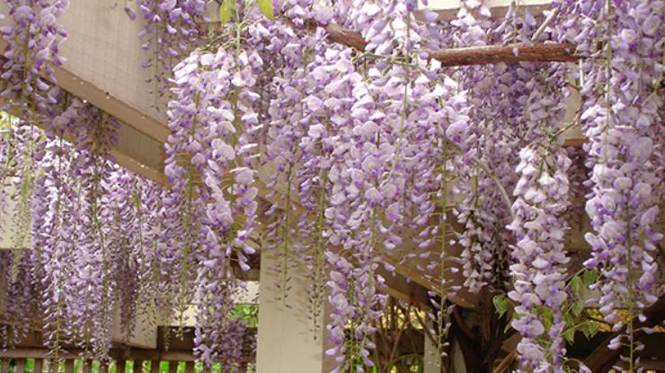 các loại hoa dễ trồng nở quanh năm