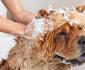 chó bị ghẻ có nên tắm