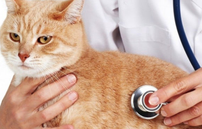 chữa tiêu chảy cho mèo