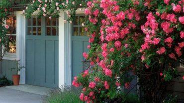 nên trồng cây gì trước cổng nhà