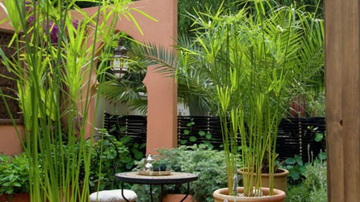 trồng trúc trong nhà