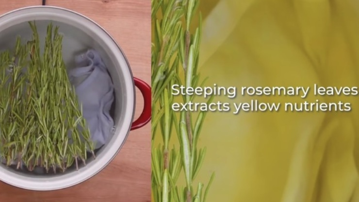 cách nhuộm quần áo bằng lá cây