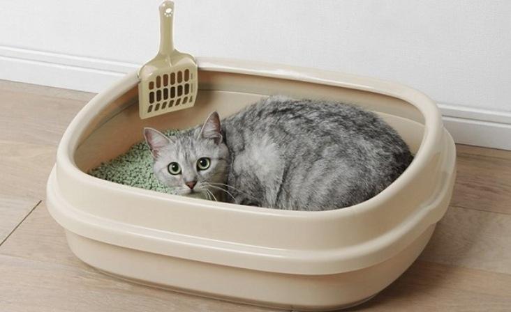 hướng dẫn mèo đi vệ sinh vào bồn cầu