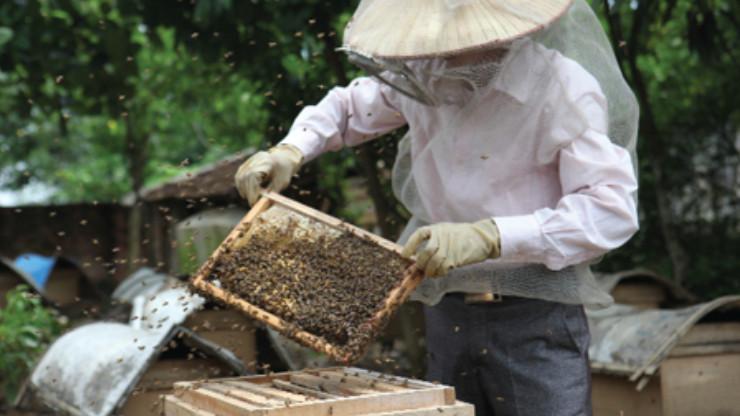 cách nuôi ong mật tại nhà