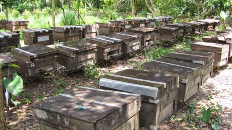 cách nuôi ong mật tự nhiên
